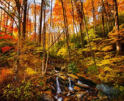 Photo free autumn leaves, stream, rocks