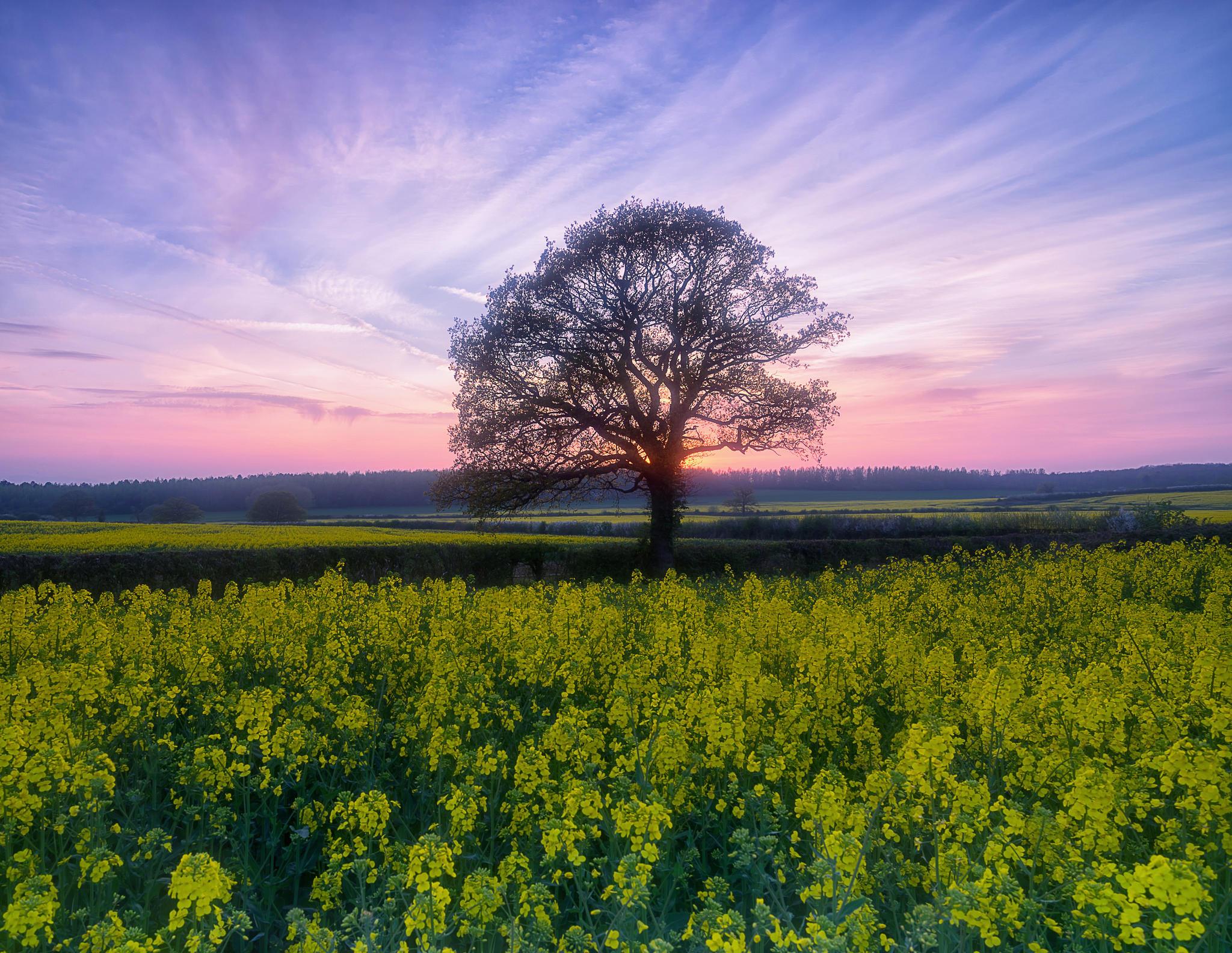 Обои закат, поле, дерево, цветы