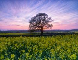 Бесплатные фото закат, поле, дерево, цветы, пейзаж