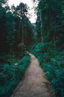 Бесплатные фото лес,тропа,деревья,forest,path,trees