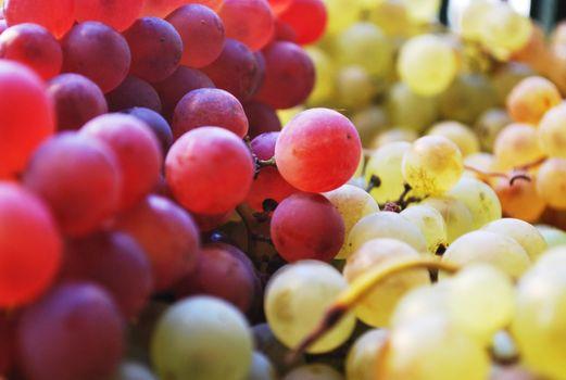 Photo free grapes, fruits, many