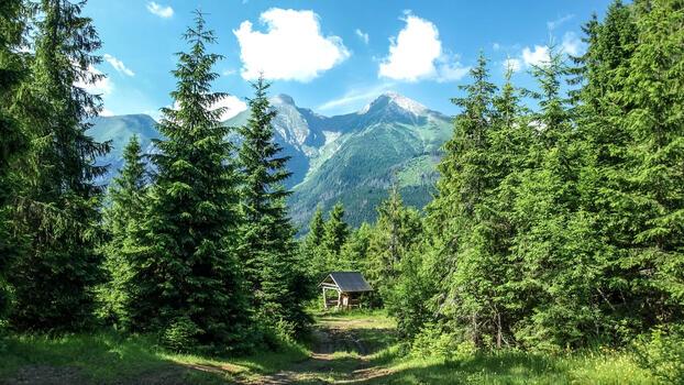 Фото бесплатно деревья, лето, пейзажи