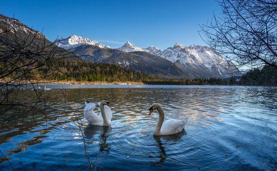 Photo free mountains, swans, landscape