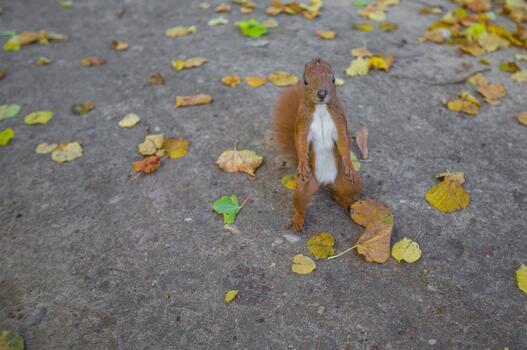 Photo free squirrel, pavement, mammal