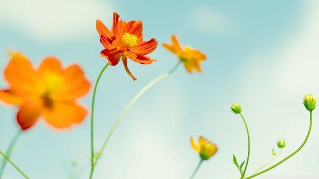 Фото бесплатно оранжевые цветы, небо, лепестки