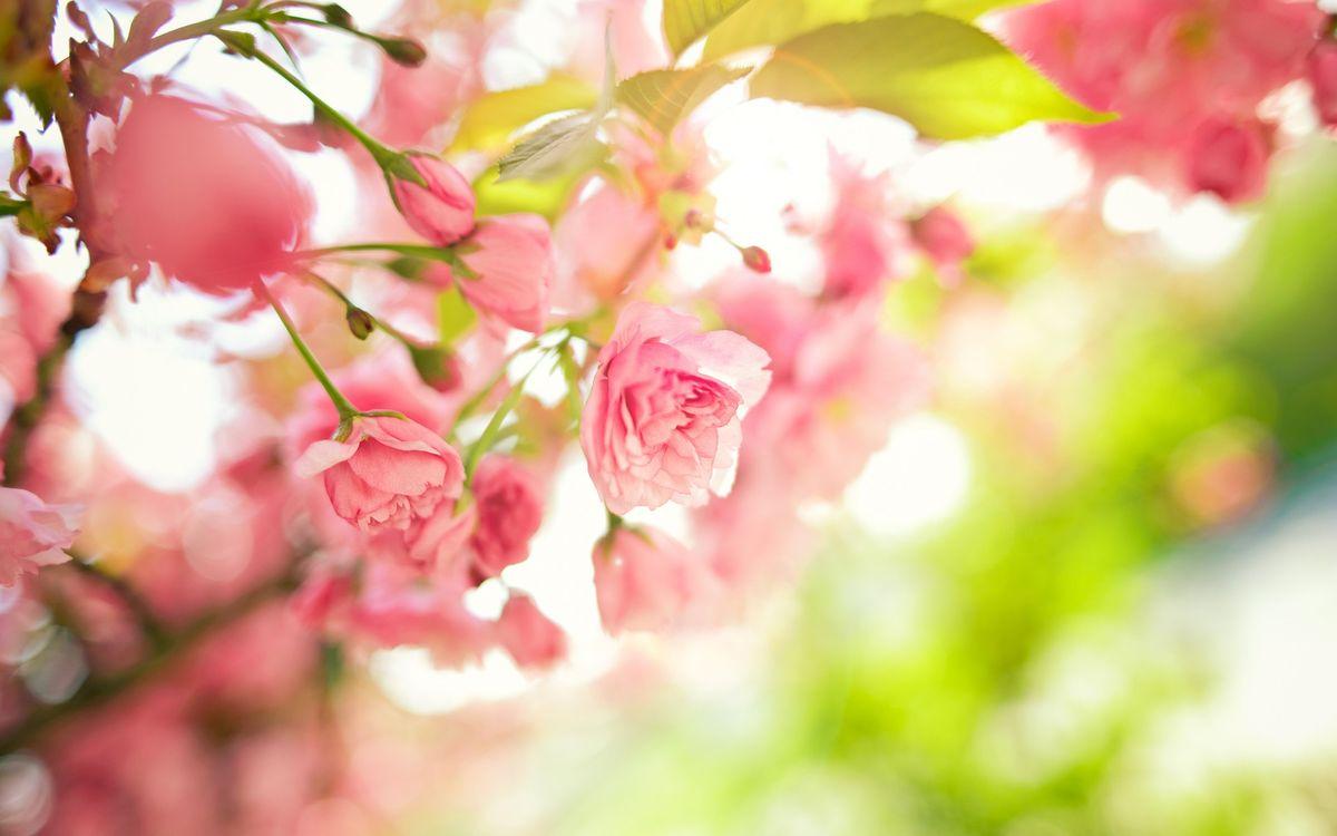 Фото бесплатно ветки, цветы, листья - на рабочий стол