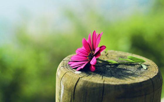 Фото бесплатно цветы, розовые цветы, пень