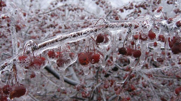 Бесплатные фото фрукты,лед,растения,вишня,природа,холод,обледенение