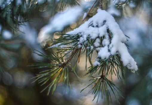 Заставки снег, ель, размытый фон