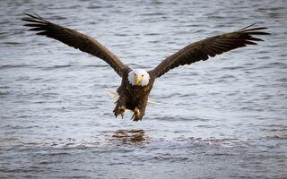 Бесплатные фото животные,птицы,орел,размах крыльев,полет,над водой