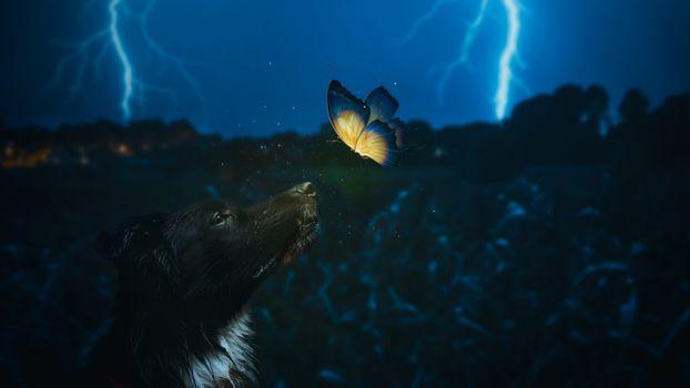Заставки собака, бабочка, молнии