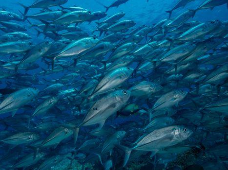 Фото бесплатно море, подводный мир, рыбы