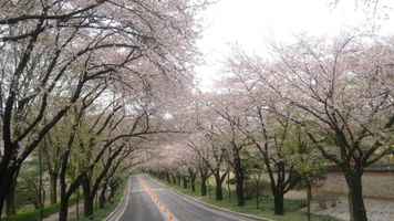 Фото бесплатно деревья, дорога, ветвь