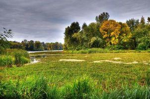 Бесплатные фото заводь,Днепр,Киев,Украина,река,деревья,пейзаж