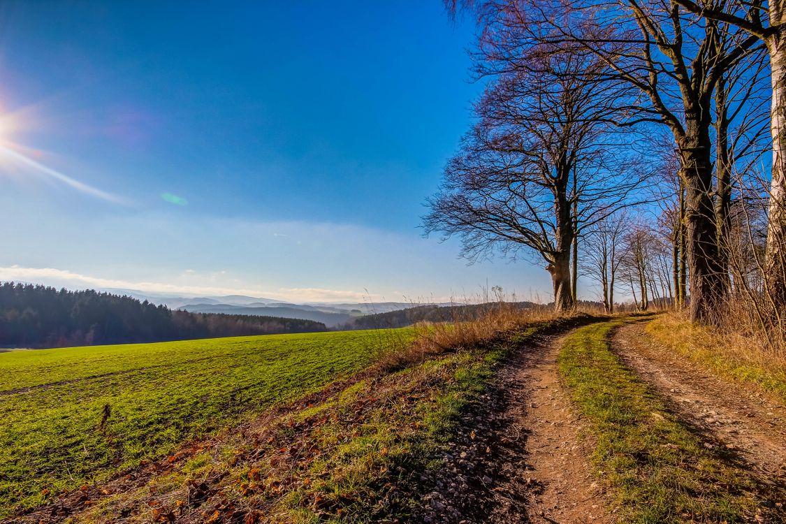 Фото бесплатно поле, дорога, деревья, пейзаж, пейзажи