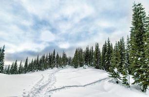 Бесплатные фото зима,снег,деревья,тропинка,сугробы,пейзаж