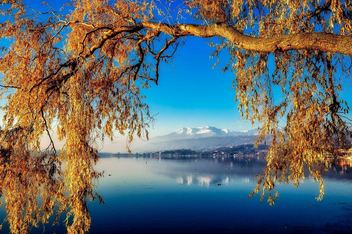 Фото бесплатно осень, закат, река, ива, плакучая, дерево, ветки, пейзаж, пейзажи