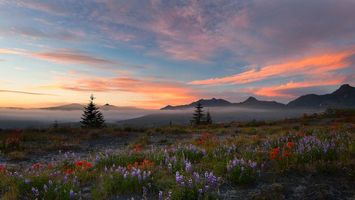Бесплатные фото закат, поле, горы, туман, деревья, цветы, пейзаж