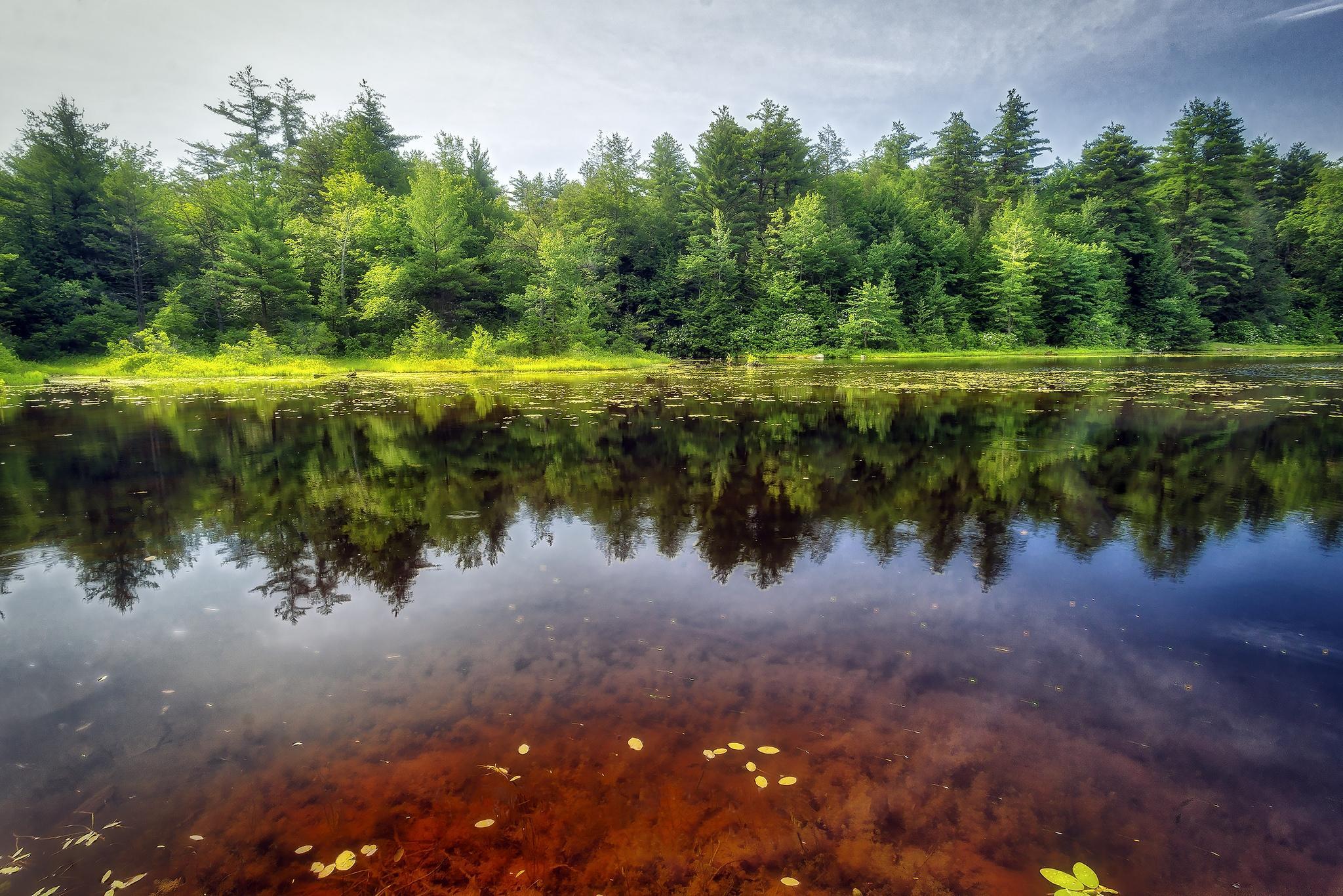 Обои Ricketts Glen State Park, Pennsylvania, Риккетс Глен Стейт Парк, река