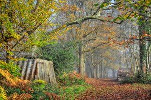 Бесплатные фото осень,лес,парк,деревья,тропинка,туман,пейзаж