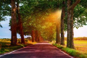 Бесплатные фото поле,дорога,деревья,солнечные лучи,аллея,пейзаж