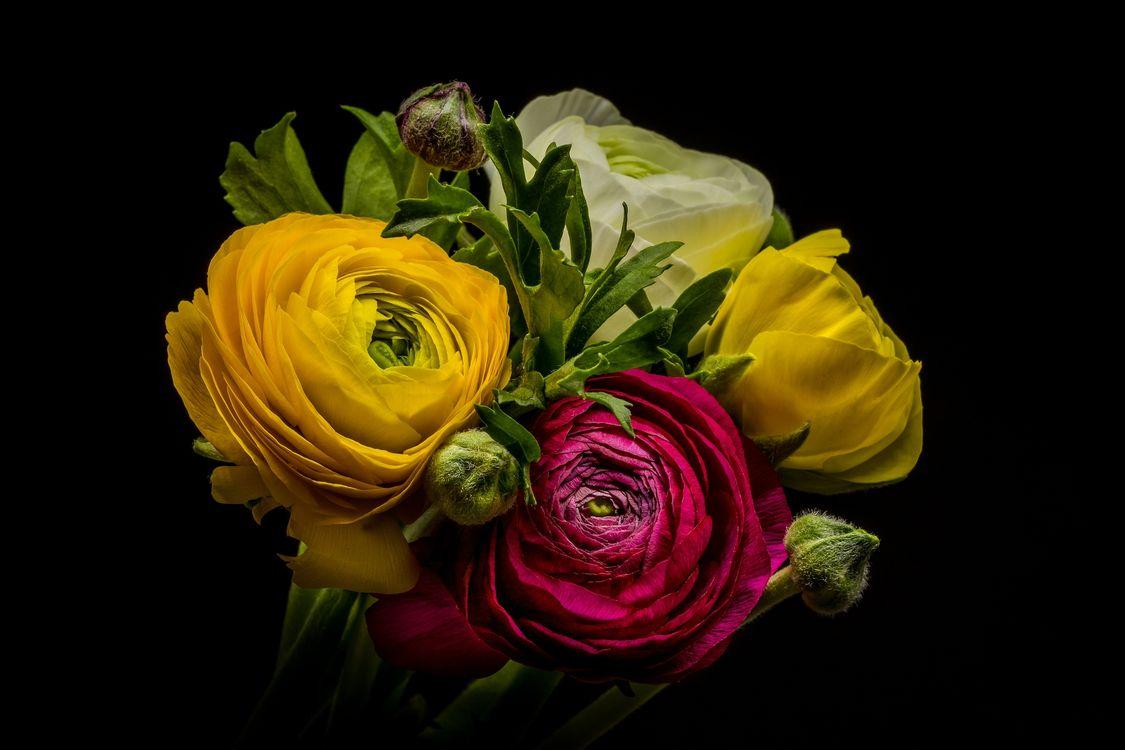 Фото бесплатно anemone, анемоны, цветок, цветы, флора, цветочная композиция, чёрный фон, букет, цветы