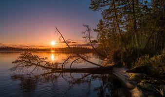 Фото бесплатно деревья, берег, пейзаж