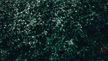 Бесплатные фото листья,дерево,ветви,leaves,tree,branches