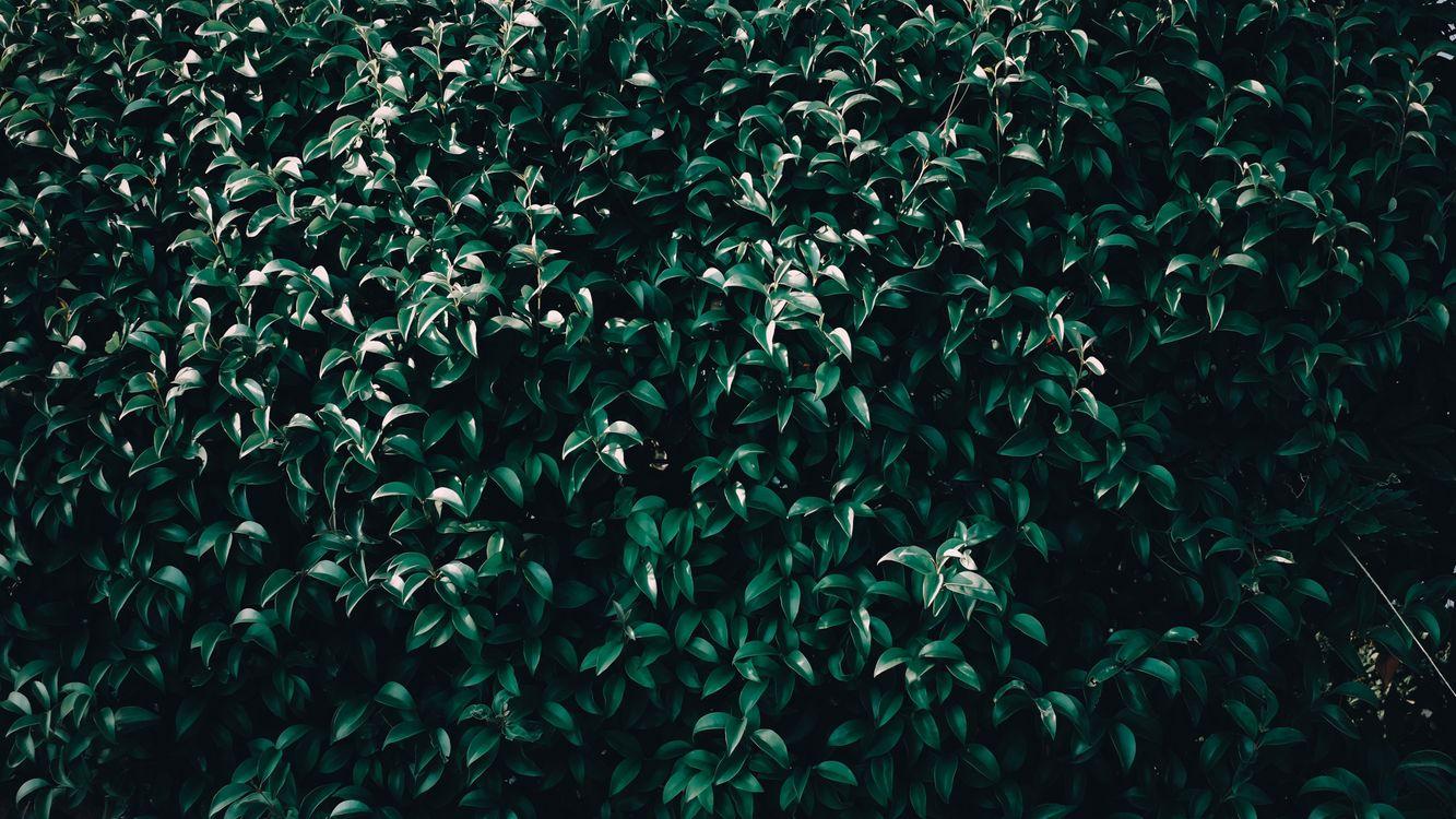 Фото бесплатно листья, дерево, ветви, leaves, tree, branches, природа