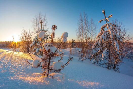Заставки зима, снег, деревья в снегу