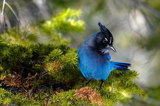 Photo free birds, boke, photos