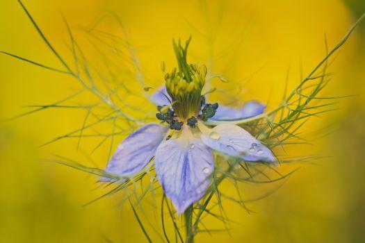 Photo free flower inside, water drops, purple