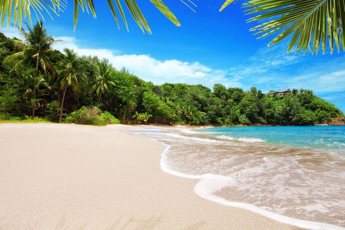 Фото бесплатно пляж, тропики, пальмы - на рабочий стол