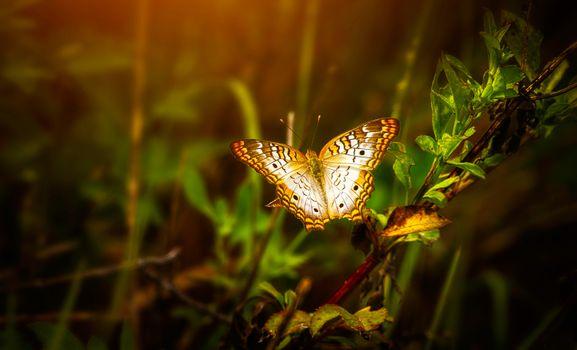 Photo free butterfly, leaf, blur