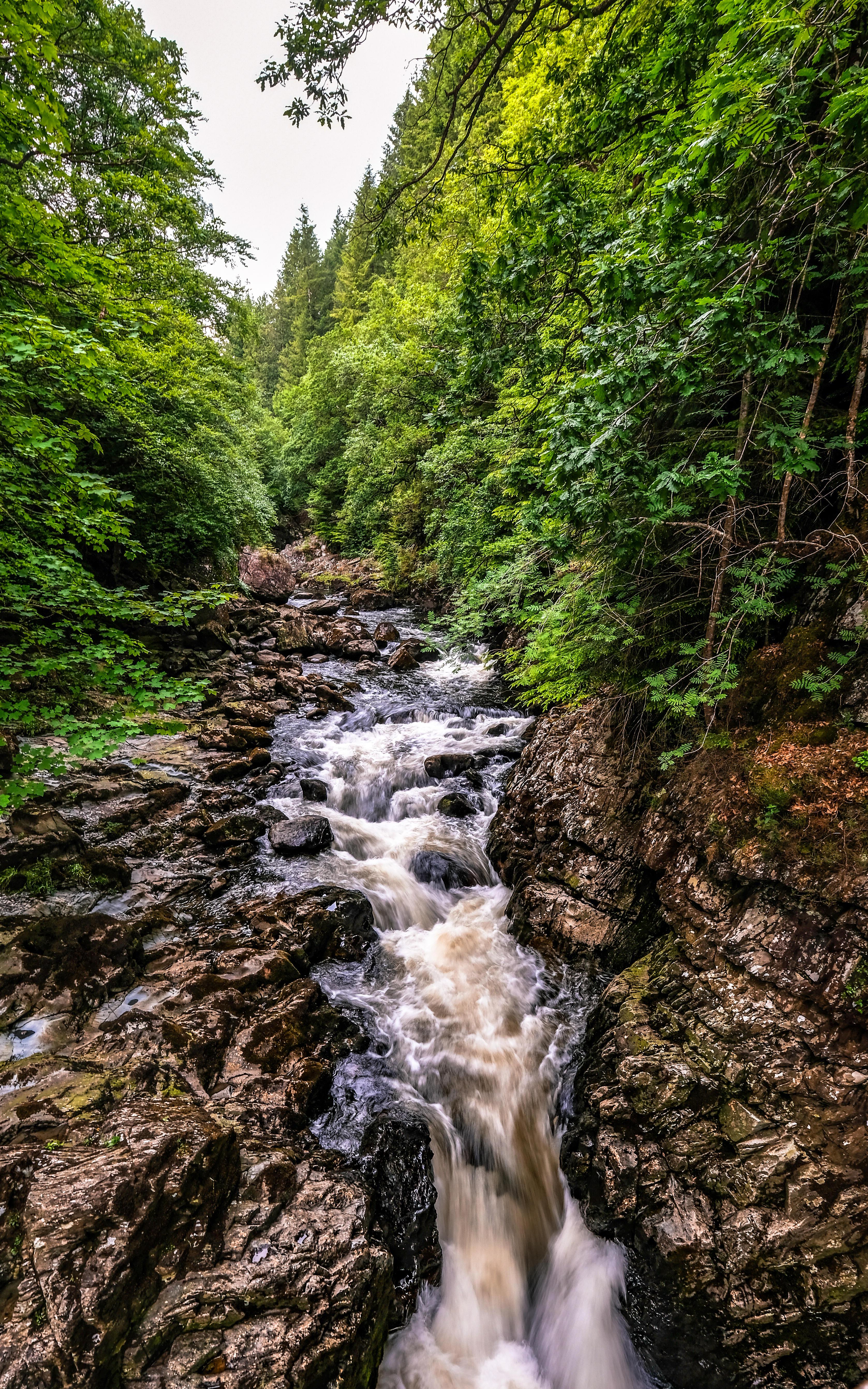 Обои лес, деревья, скалы, река
