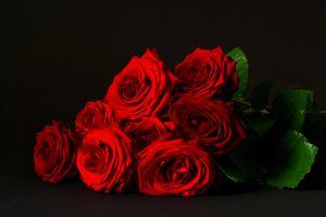 Фото бесплатно роза, розы, букет