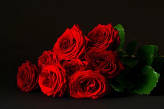 Phone wallpaper roses, bouquet