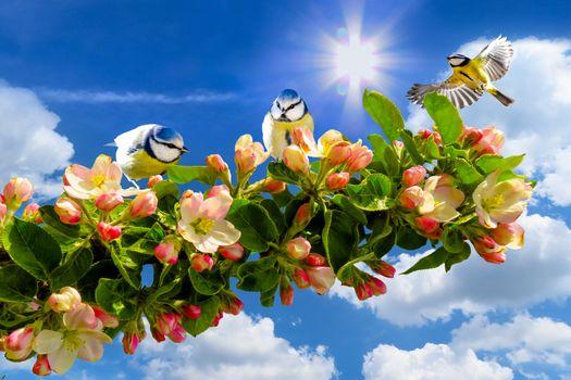 Photo free season, spring, tree