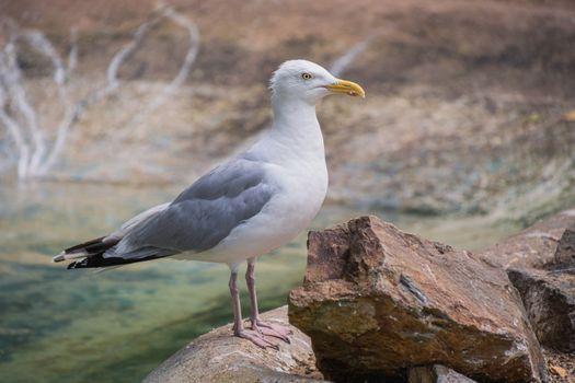 Фото бесплатно чайка, птицы, сторона