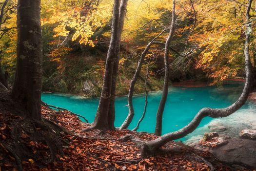 Бесплатно лес, осень - новые фото