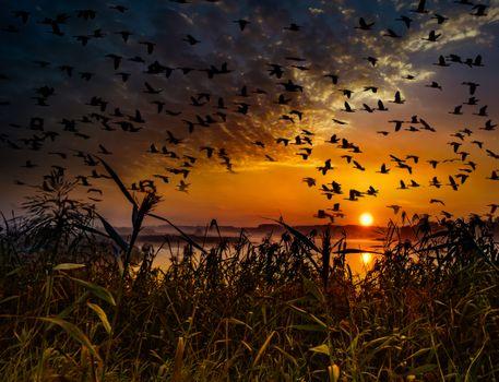 Фото бесплатно закат, озеро, тростник