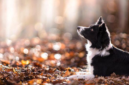 Фото бесплатно собака, животные, глубина резкости
