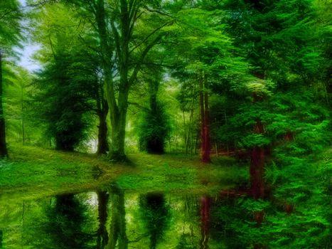 Фотографии лес, водоём на телефон