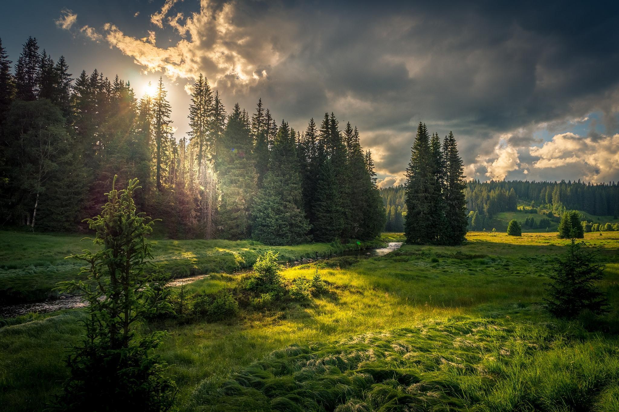 подробнее, как качественные фотографии российского леса неспокойный месяц