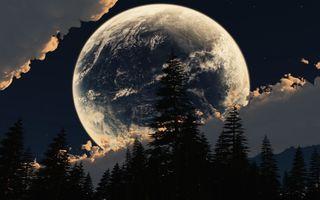 Фото бесплатно Луна, большие, деревья