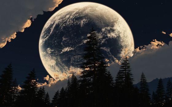 Заставки Луна, большие, деревья