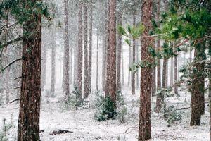 Фото бесплатно январь, снежная буря, экосистема