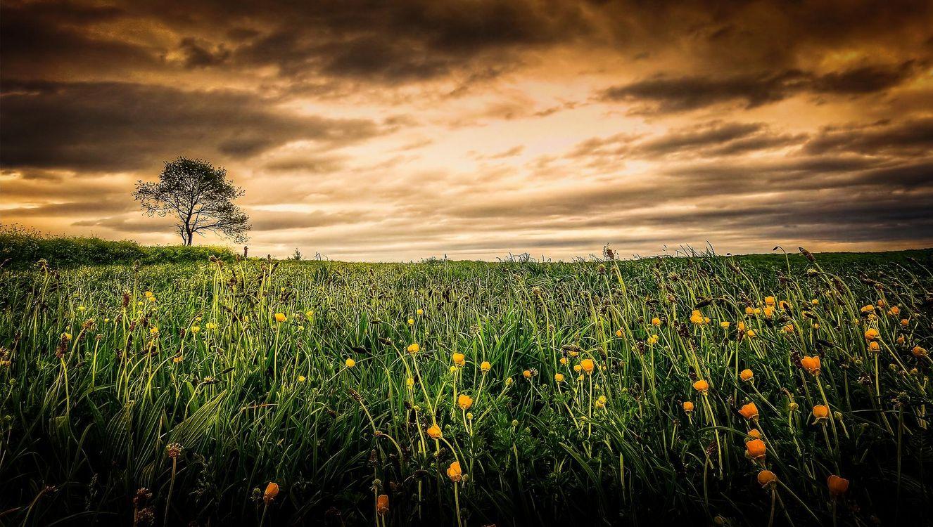 Фото бесплатно закат, поле, цветы, дерево, пейзаж, пейзажи