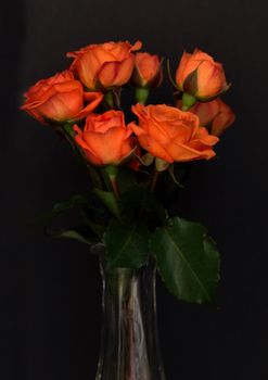 Photo free flower, rose, orange