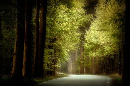 Фото бесплатно лес, деревья, дорога
